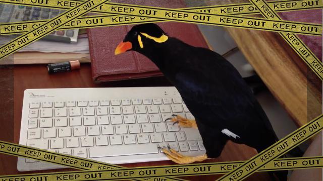 bird-f [www-frame
