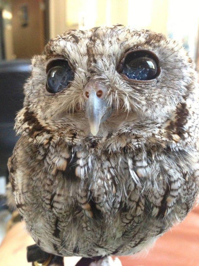 owl-photography-33__880_e