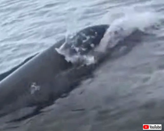 dolphinjuggling1_640