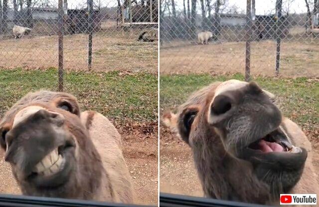 donkey6_640