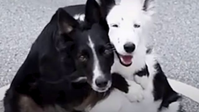 huggingdogs6