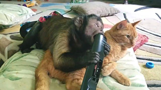 catnmonkeyTV1