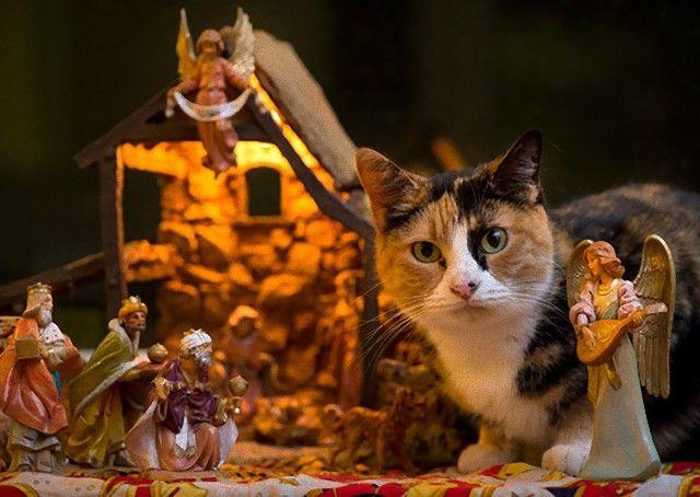cats-crashing-nativity-scenes-105-5a27c7bdb597b__605_e