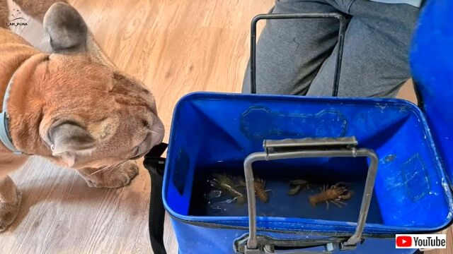 crayfishnmessi1_640