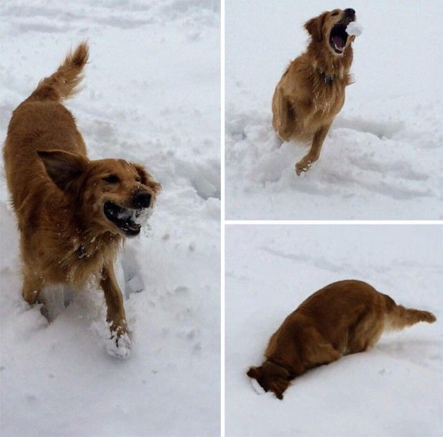 funny-animals-first-snow-cats-dogs41_e
