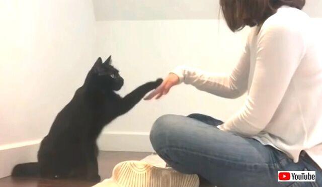 blackcats3_640