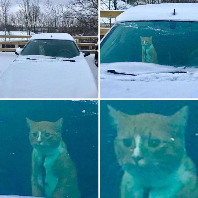 funny-animals-first-snow-cats-dogs40_e
