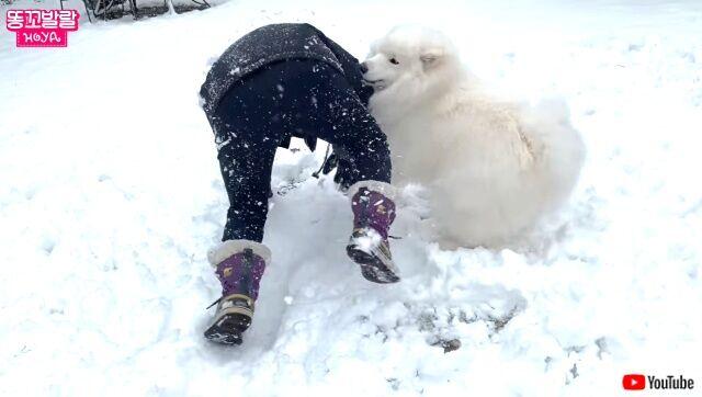 snowfield3_640