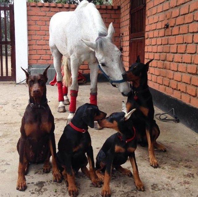 犬と馬7_e