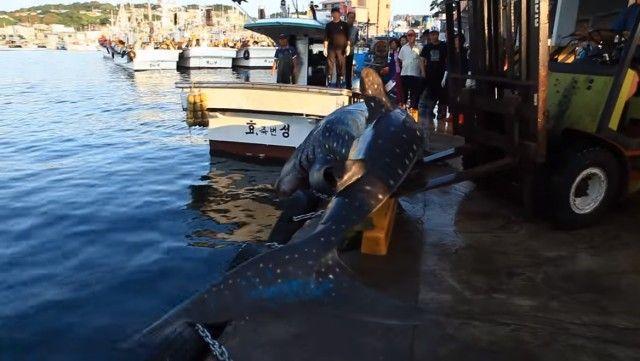 whalesharkinkorea5_e