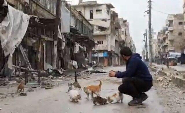 戦禍のシリアから~空爆再開!爆撃の中の猫たち避難を余儀なくされる
