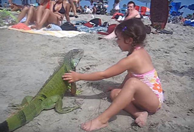 iguanangirl