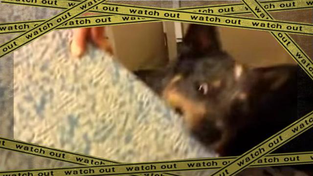dog2-frame