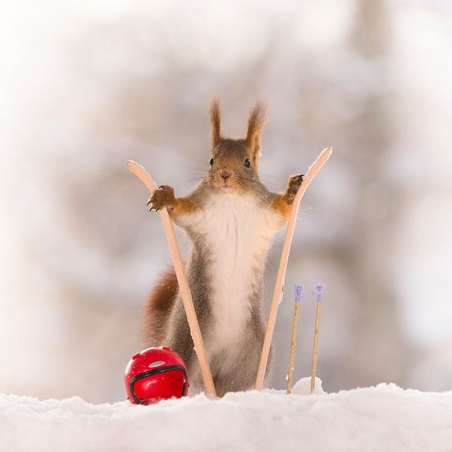 wintersportssquirrel9_e