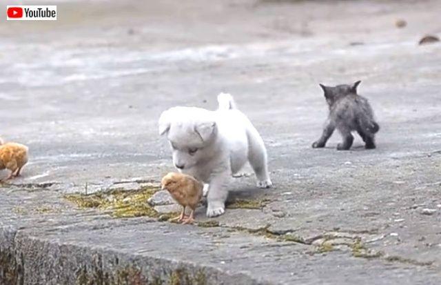 puppynchicks5_640