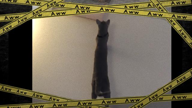 cat-f_e-frame