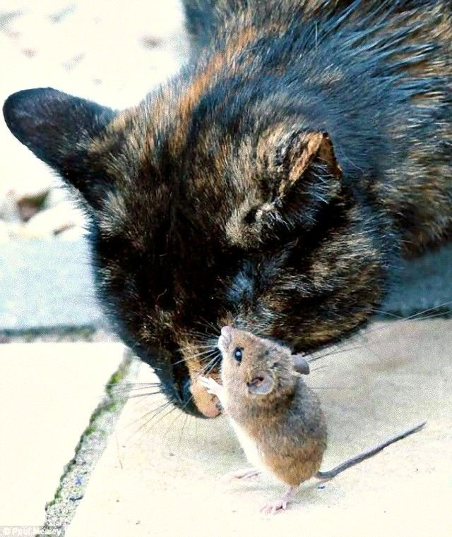 cat_and_hamster_friends_e