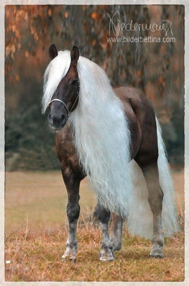horse13_e