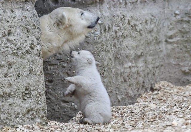 winking-polar-bear-cub-germany-5-58b7ce34386a0__880_e