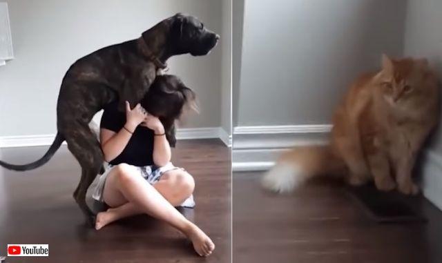 puppynkitten3_640