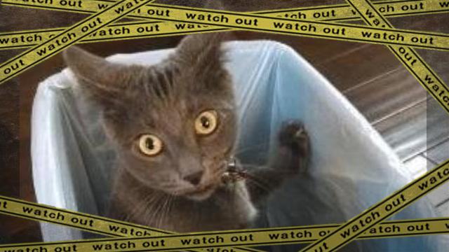 cat-f3 [www-frame