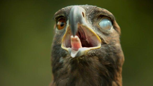slowmobirds11_e