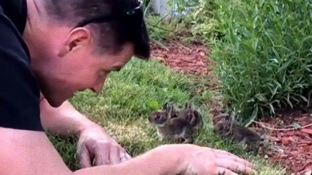 庭で赤ちゃんウサギが生まれていた!出会いに感動する人間男性とウサギたちのかわいさに関する海外の反応