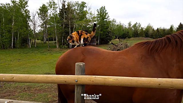 horsetaxi3