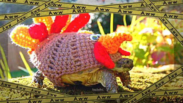 sweater-tortoise-turkey_a_e-frame