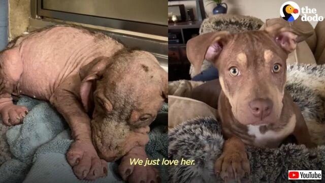 愛を知らずに震えていた子犬、献身的な手当てを受けて最高にハッピーなわんこに変身!