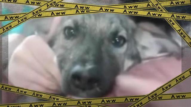 dog-f [www-frame