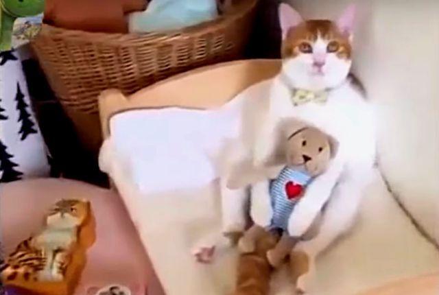 catcat5