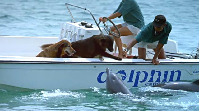 dolphinkiss1