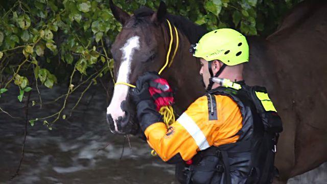 floodhorse5