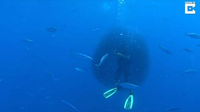 fishsurrounddiver3