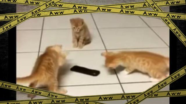 kitten-f [www-frame