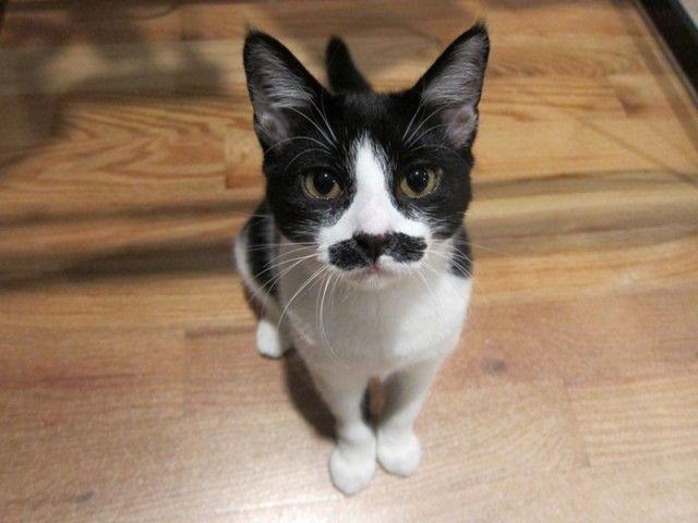 mustaches12_e
