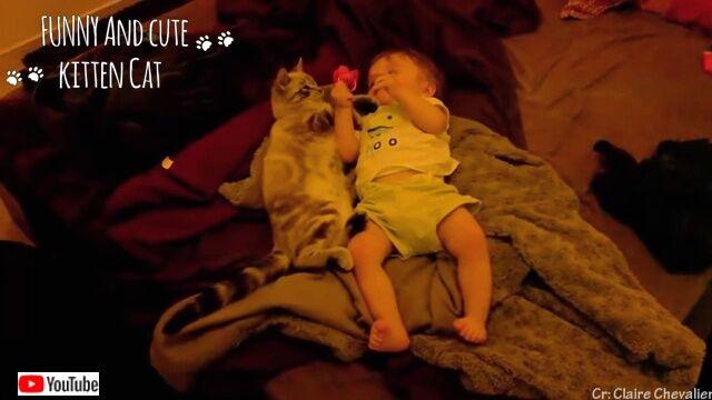 cutebabyncats4_640