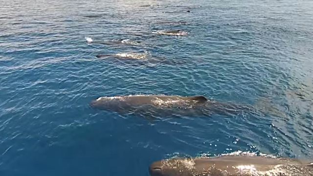 swimmingwwhales2