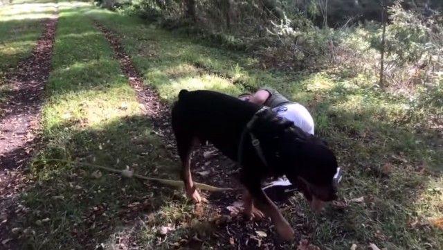 rottweiler10_e