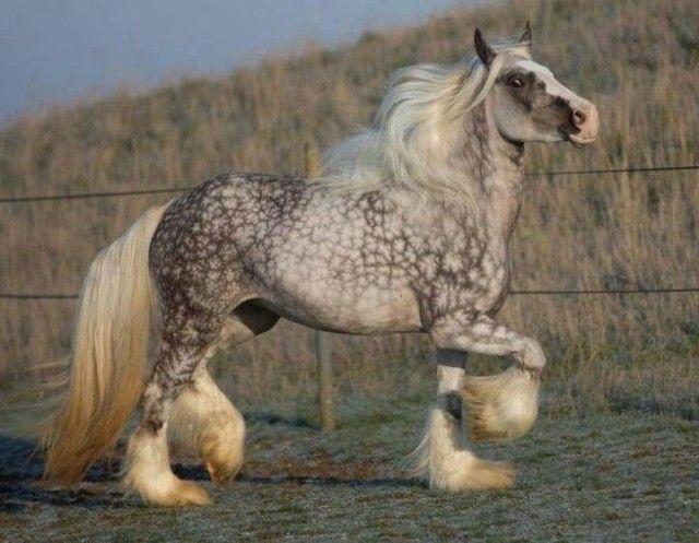 horse14_e