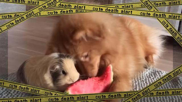 dogandquineapig [www-frame