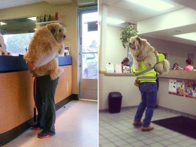 big-puppy18_e