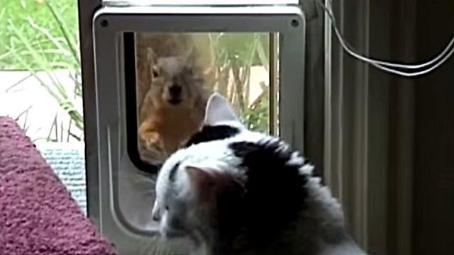 squirrelncat2