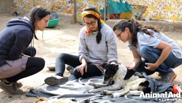 volunteeringatanimalaid7_e
