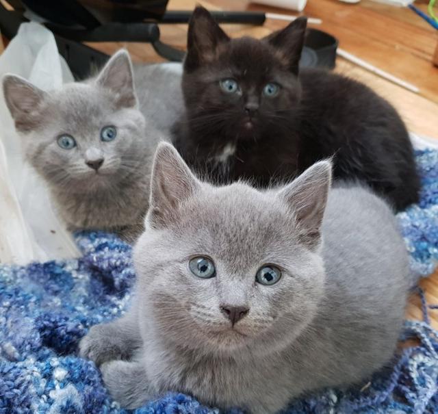 cat-13 [www.imagesplitter.net]