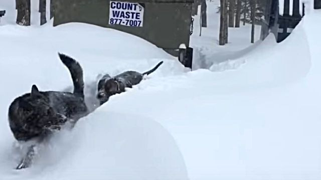 snowdog4