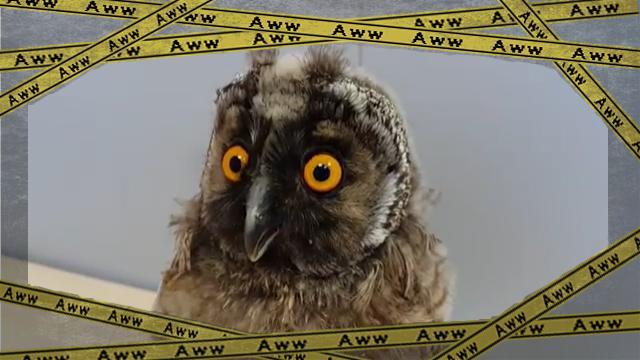owl [www-frame