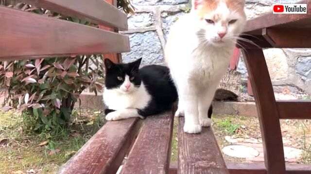catsrbackinlove5_640