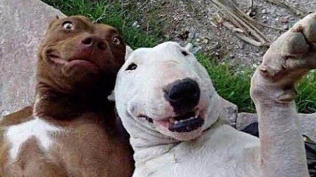 funnydogs_11_e